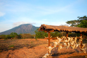 Baluran National Park Tour